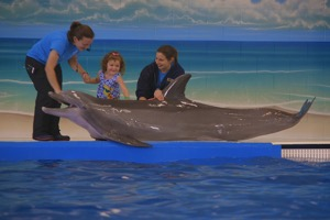 Waikoloa Beach House Rentals, Dolphin Encounters