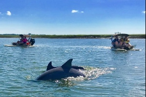 Dolphin tours at Hilton Head Island